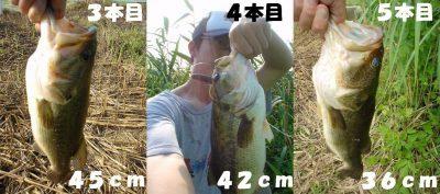 s-bass2